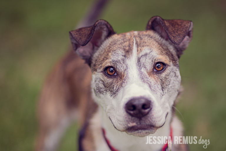 Posts Tagged Chicago Pet Photography Jessica Remus
